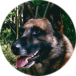 chien adulte wallabies paulhac